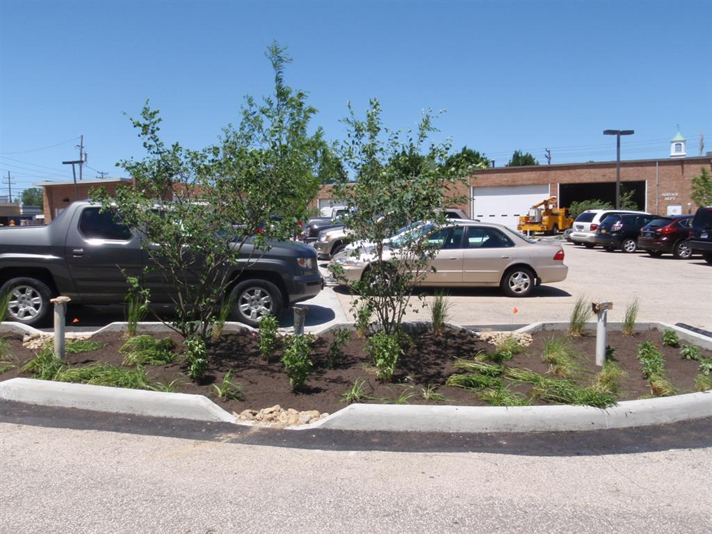 Forested Parking 4 Bioswale After